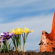 Ammenmärchen über den Frühling